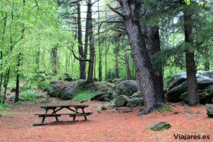 Els pins, àrea recreativa